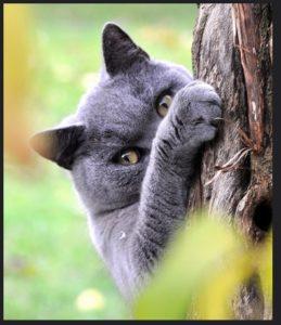 Кот злой