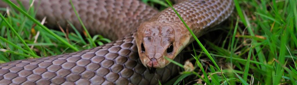Что нужно знать новичку про содержание змей