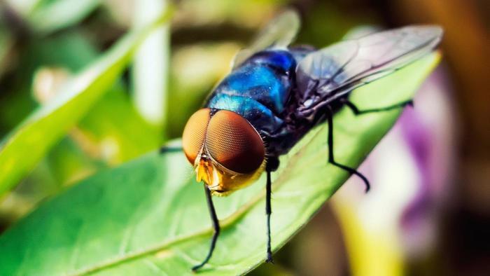 Как выглядят укусы мух