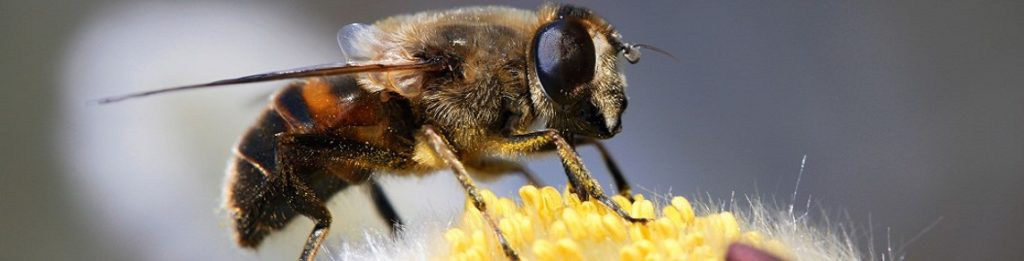 Что лечат укусами пчел