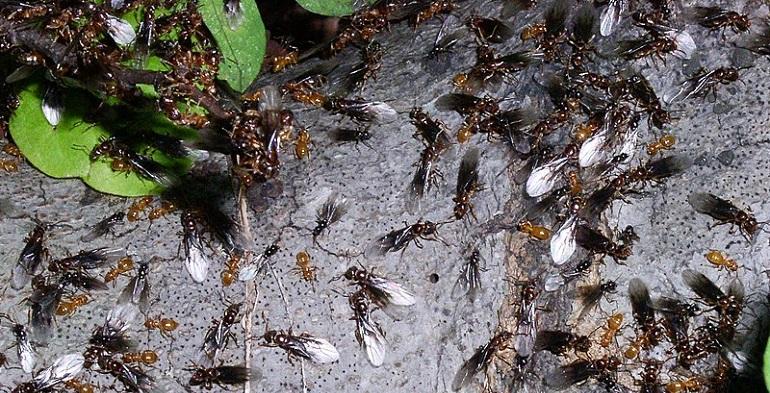 день муравьев