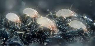 Нашествие паразитов