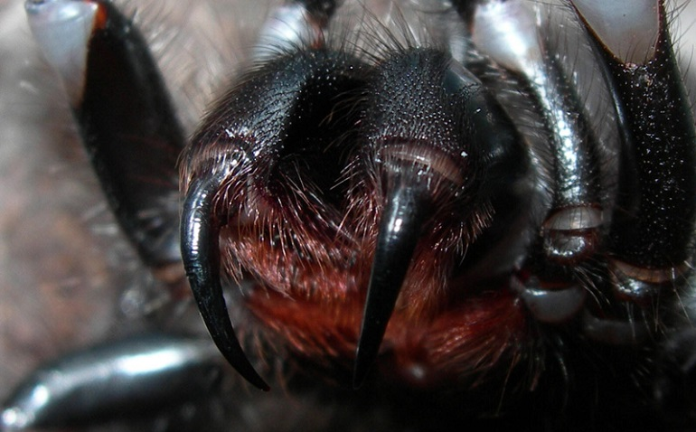 Что будет если укусит паук