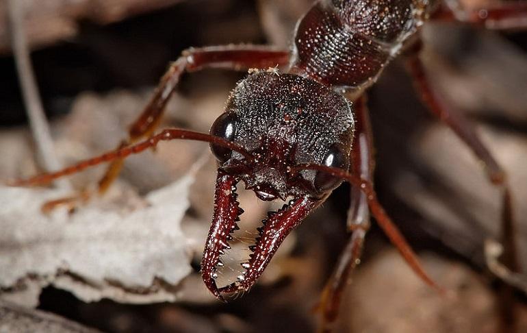укусил муравей