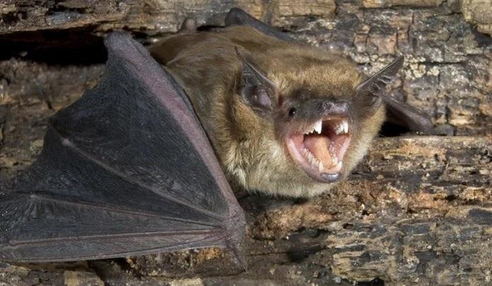 острые зубы